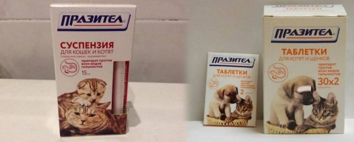 Дюфалак для кошек при запоре – дозировка, как давать, инструкция