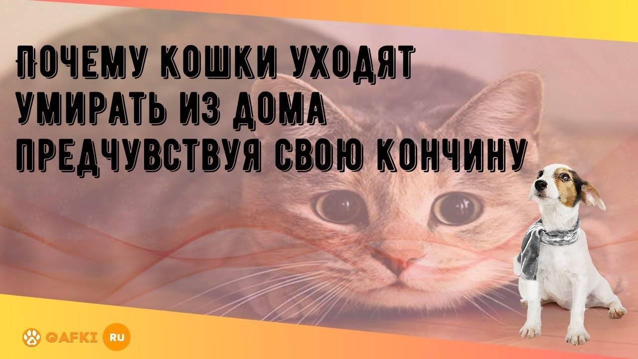 Куда уходят умирать коты и почему перед смертью они никогда не бывают дома