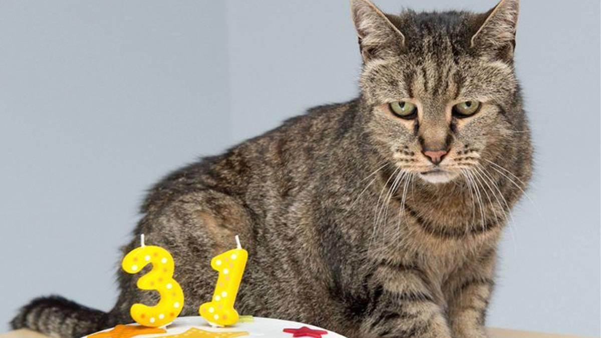 Самые старые коты в мире: животные-долгожители