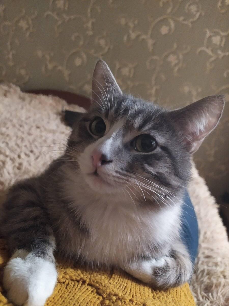 Нужно ли кастрировать кота?