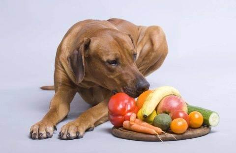 Какие фрукты можно давать собаке, а какие нет: список