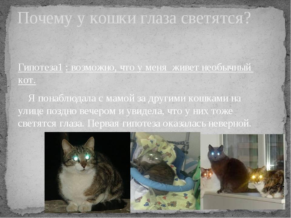 Почему у кошек светятся глаза в темноте: научные факты, какие цвета видят кошки, мифы и легенды