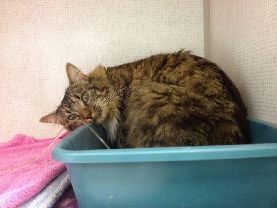 Симптоматика болезней почки у кошки: эффективные способы лечения недуга