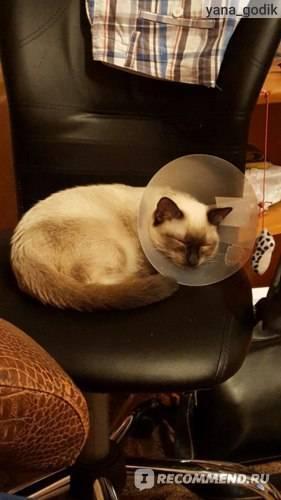 Воротник для кота после кастрации: назначение, модели, размеры, как сделать дома