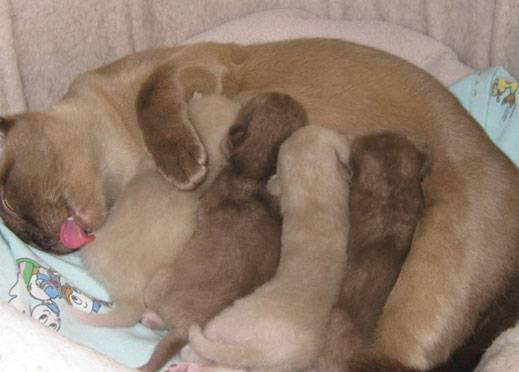 Кормление новорожденных котят – все нюансы сложного процесса