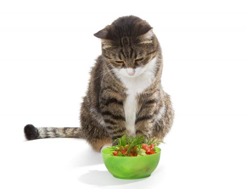 Кот ест песок из лотка, землю, огурец, мороженое, арбуз, капусту и многое другое почему