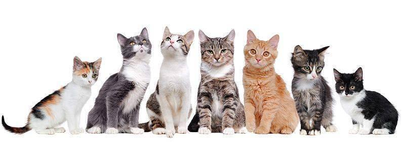 Миска для кошек: особенности выбора кормушки и правильного места для ее расположения