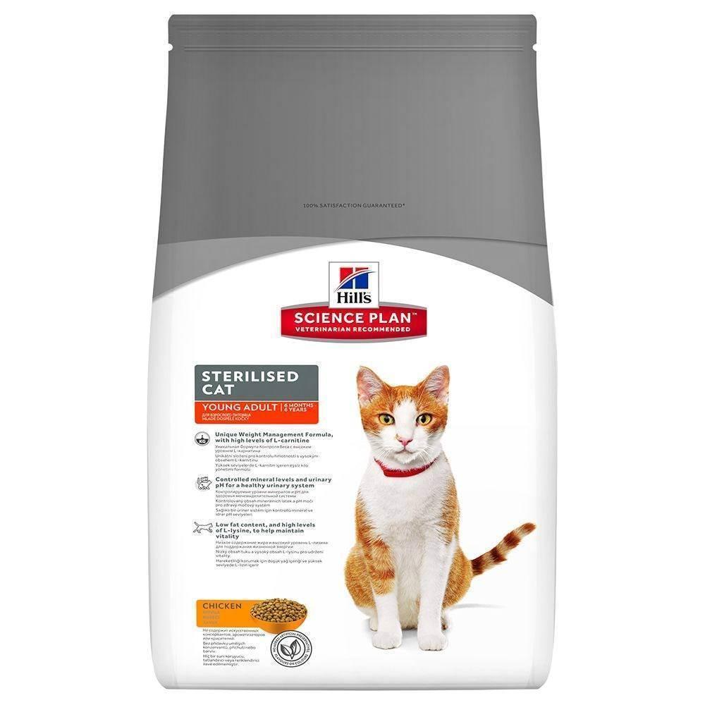 Стерилизованный кот: как правильно кормить кота кастрата, старого кастрированного британца, как правильно кормить сухим кормом кота после кастрации