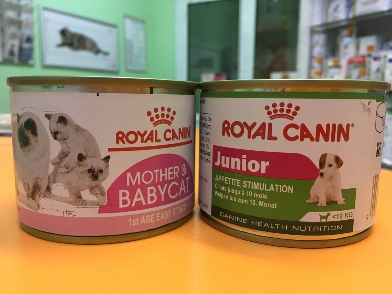 Корм для котят возрастом до года: как выбрать хороший сухой и мягкий корм? как правильно кормить котенка?