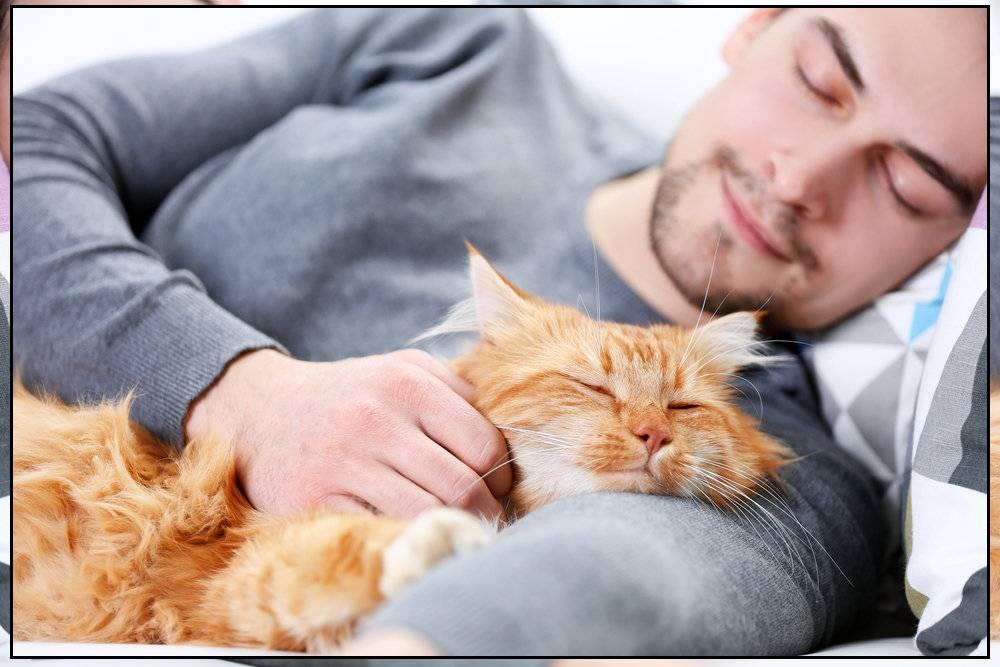 Почему кошки спят в ногах человека?