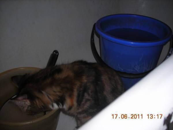 Почему кот не пьёт воду, вредно ли это: что делать, не пьёт вообще?