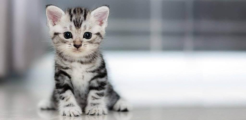 Как отучить котёнка или взрослого кота гадить в неположенном месте