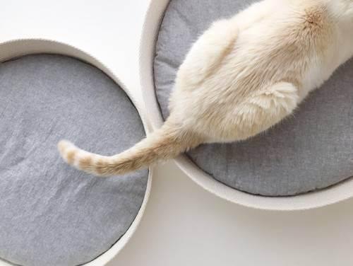 Кошка лижет волосы на голове