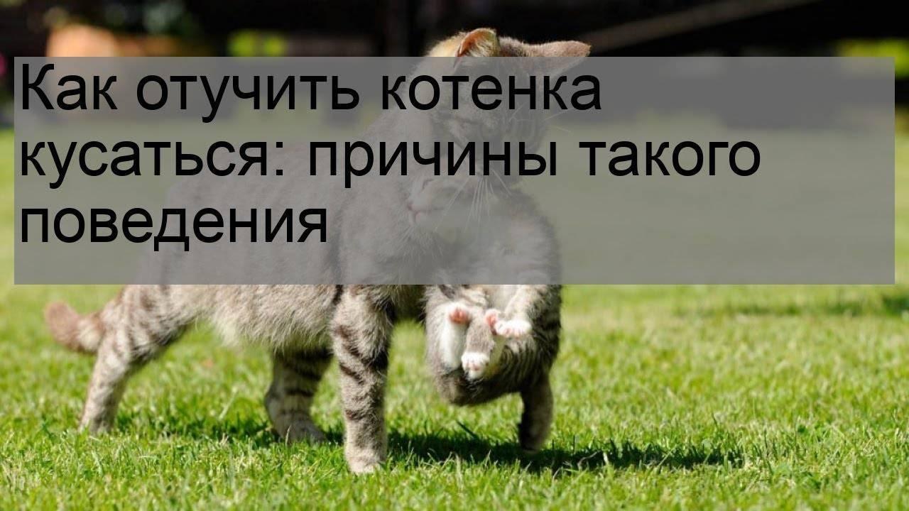 Как отучить кошку царапаться и кусаться | руки, ноги