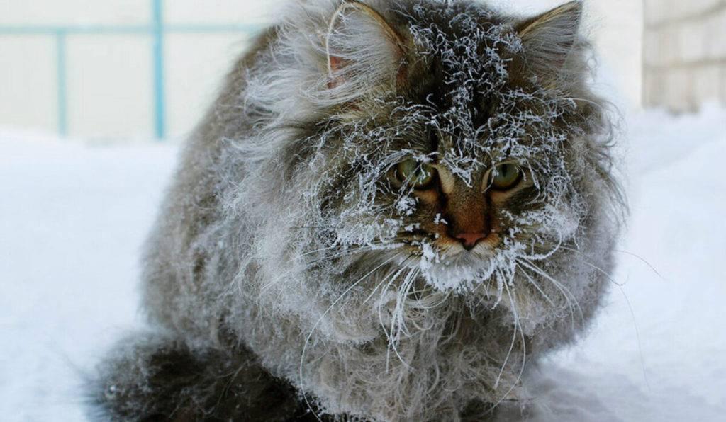 ✅ выживут ли котята зимой на даче - питомник46.рф