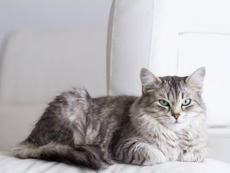 Почему кошки едят своих котят: основные причины каннибализма