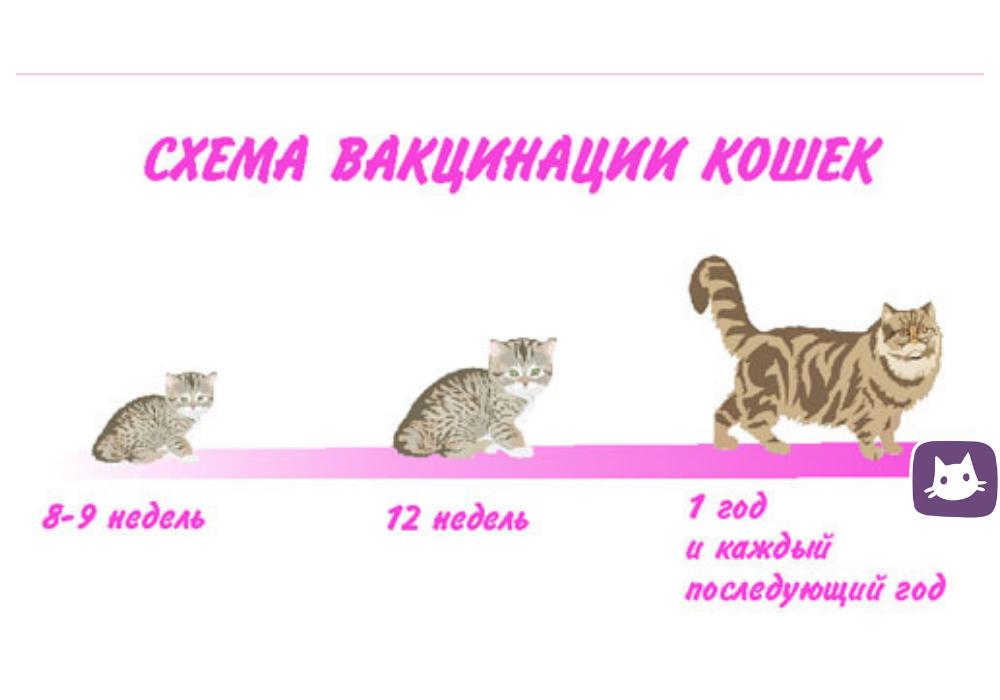 Прививка кошек: когда и какие прививки делать, вакцинация кошек по возрасту