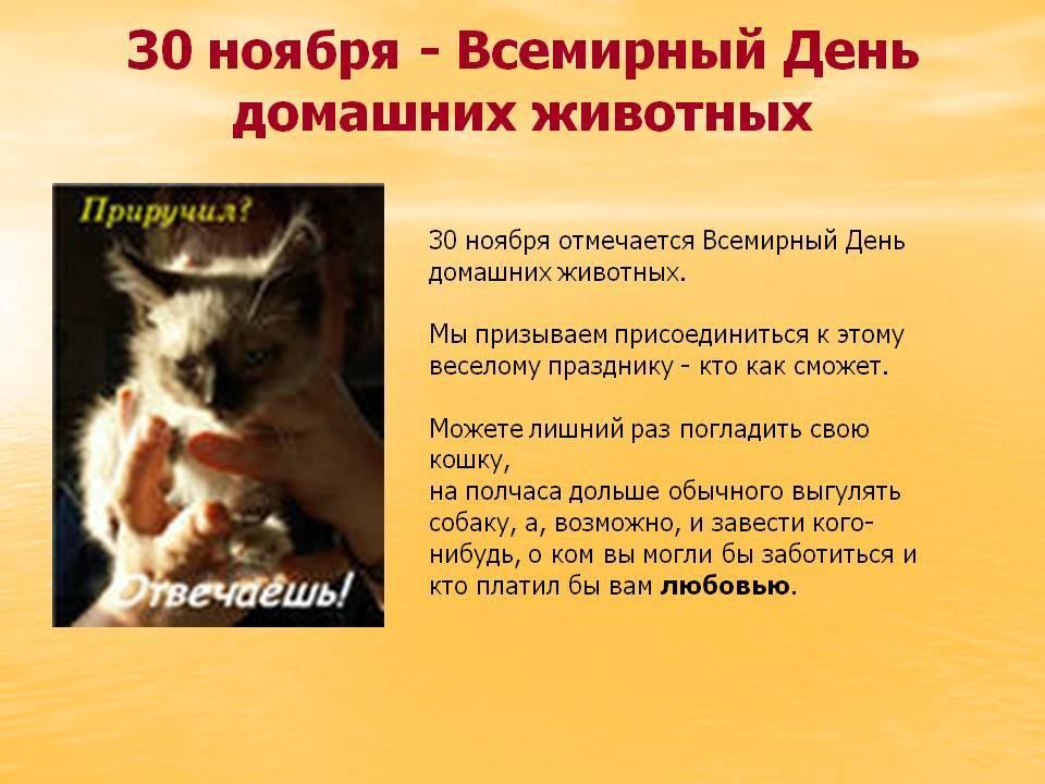 1 марта — международный день кошек