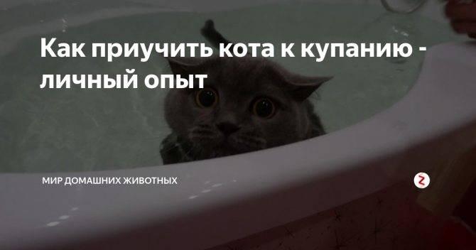 Как часто можно купать кошек и котов