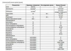 Расшифровка клинического анализа крови кошек