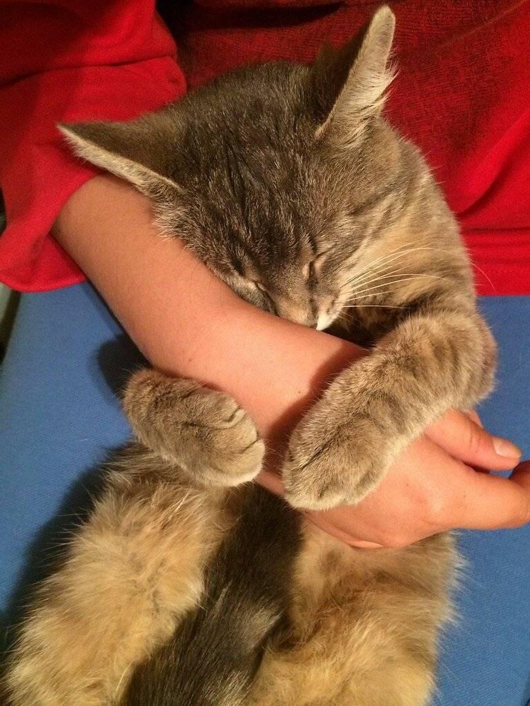 Почему кошка трется о ноги