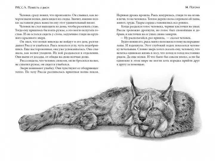 Домашняя рысь: особенности породы, характер кошки, содержание и уход в условиях дома