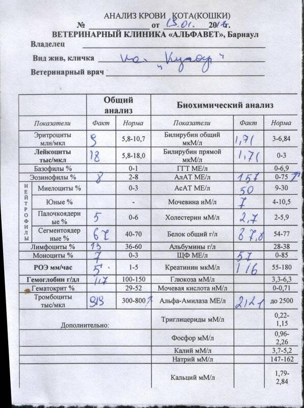 Какие болезни можно определить по анализу крови у кошки