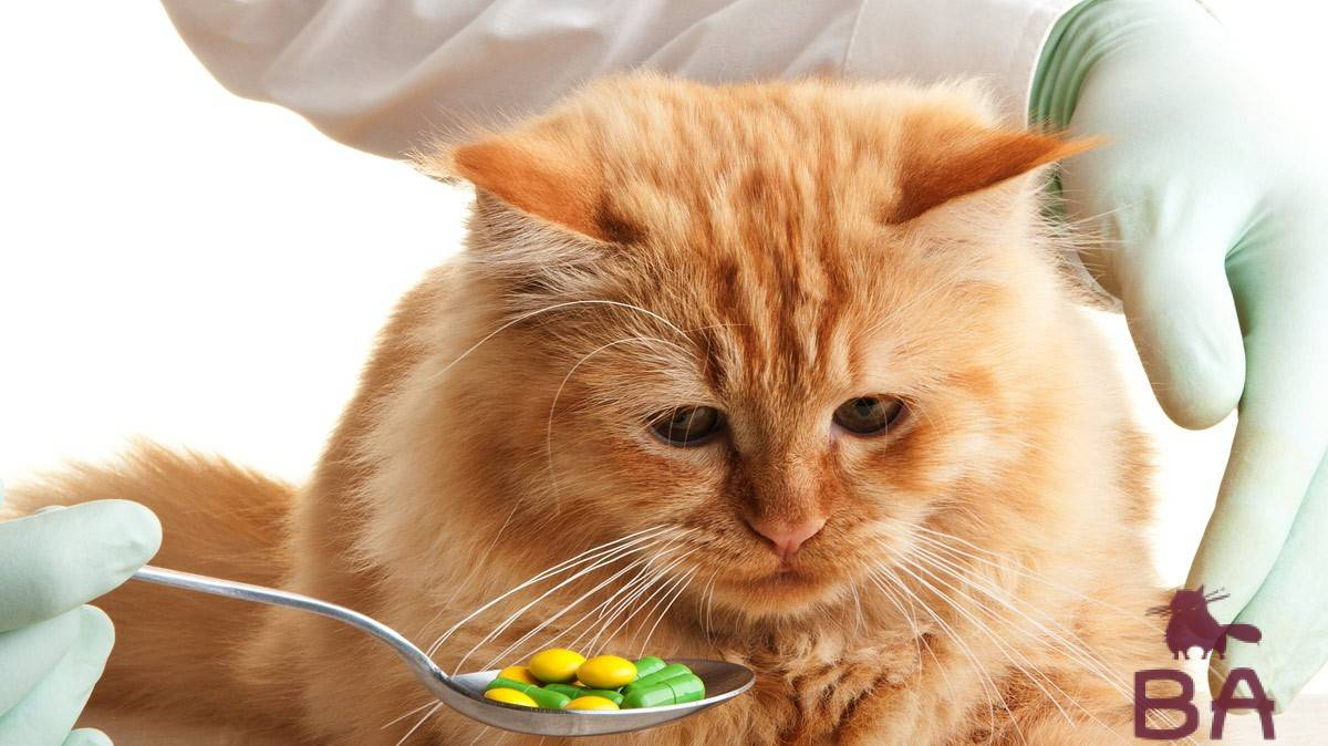 Кот много пьет воды: причины повышенной жажды у кошек, лечение полидипсии