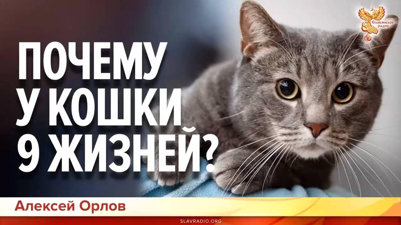 Возраст кошки по человеческим меркам: как посчитать, таблица