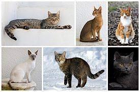 Лечат ли кошки от болезней: правда или миф?
