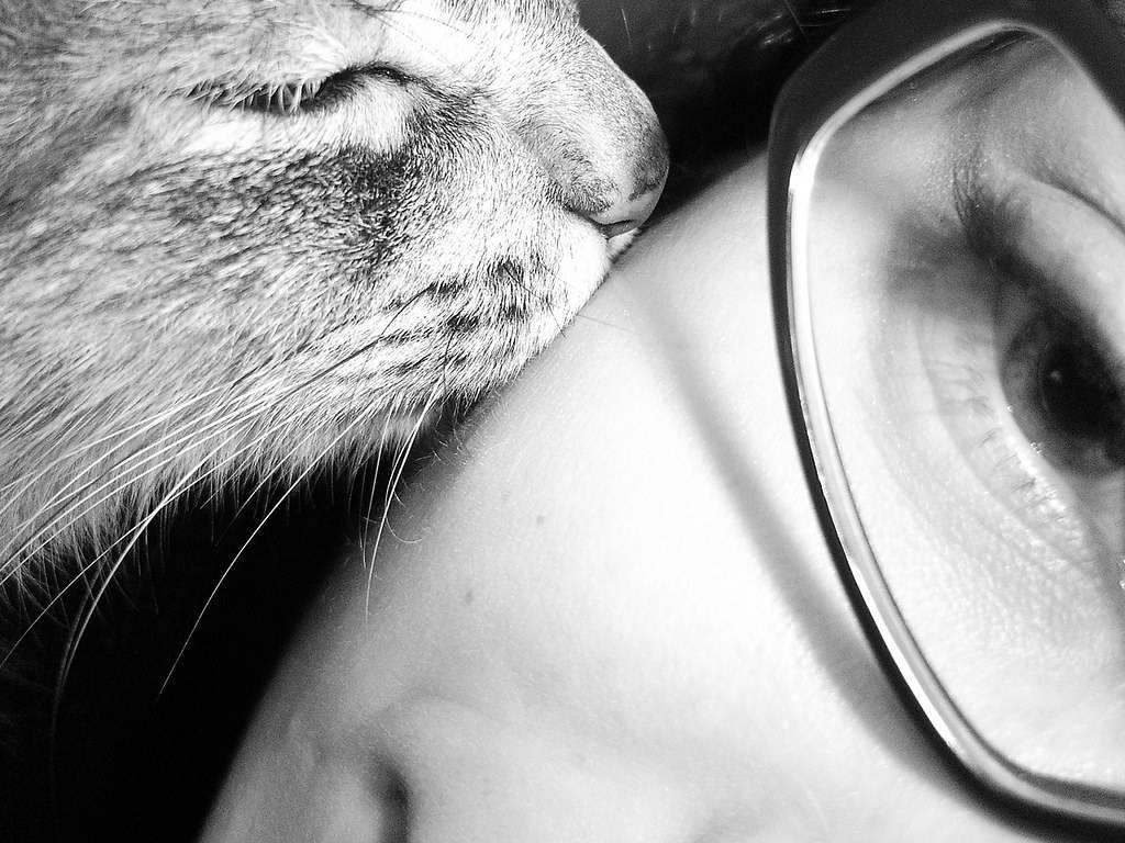 Любит ли кошка своего хозяина, чувствует ли его любовь, помнит ли человека после долгой разлуки?
