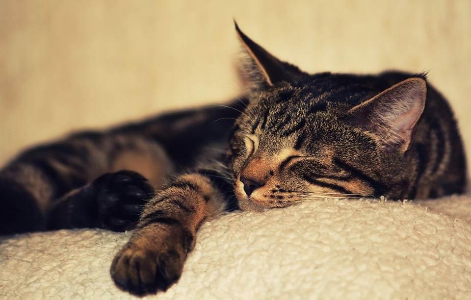 Сонник кошка живая. к чему снится кошка живая видеть во сне - сонник дома солнца