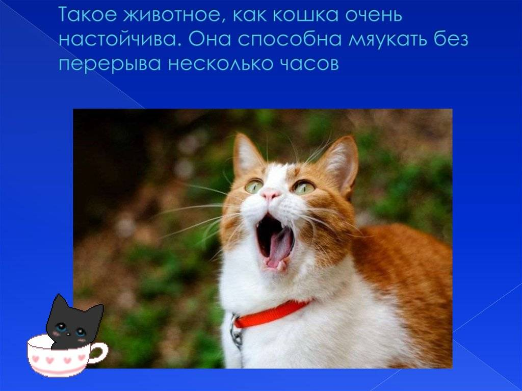 Сонник мяукает кошка. к чему снится мяукает кошка видеть во сне - сонник дома солнца