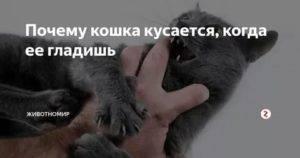 Как отучить кота кусаться?