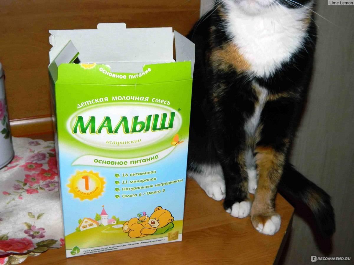 Чем кормить котенка в 1,5 месяца