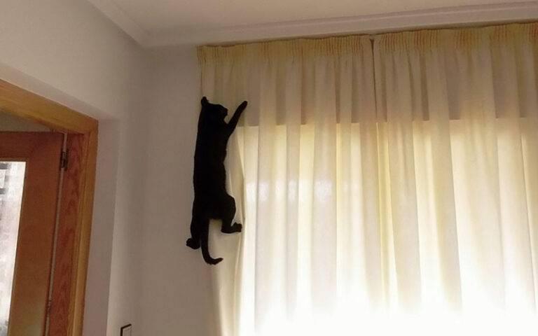 7 способов отучить кота метить территорию