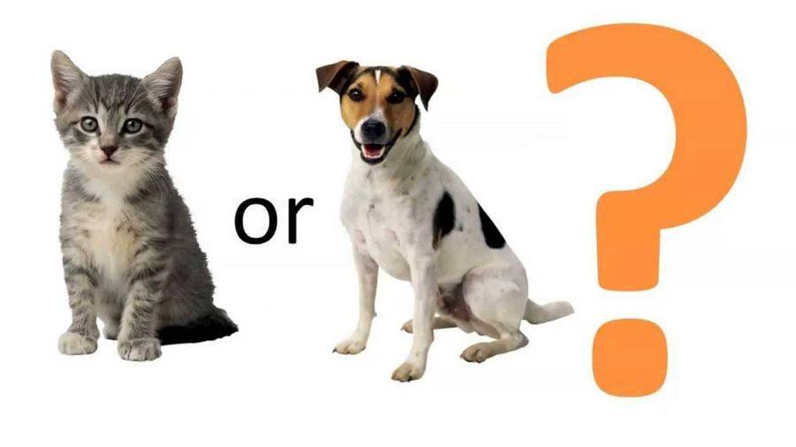 Как узнать, кто умнее – кошка или собака? отчеты исследований +видео
