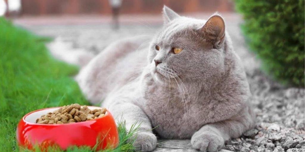 Как правильно выбрать корм для кошки: учимся читать состав