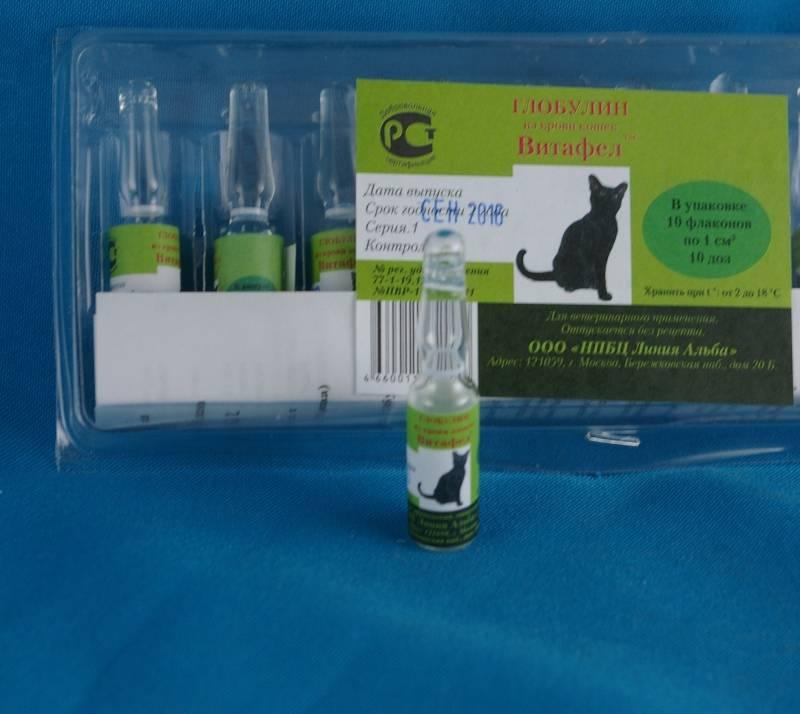 Витафел для кошек — инструкция по применению, состав, дозировка и цена