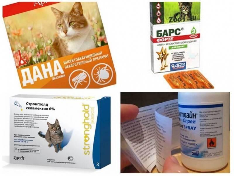 Суспензия от глистов для кошек, капли на холку от гельминтов – обзор препаратов, как давать лекарство