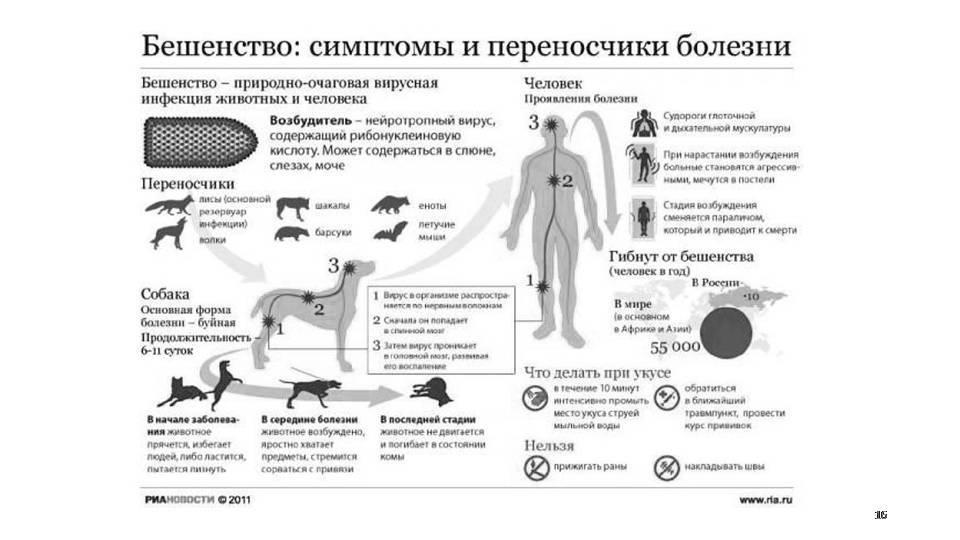 Бешенство у кошек: симптомы, опасность для человека, инкубационный период