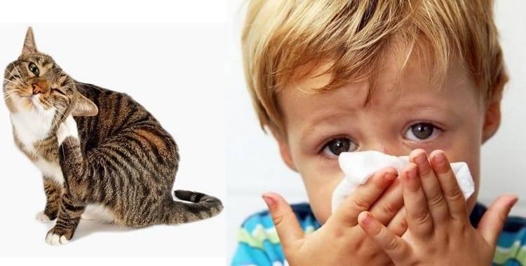 Как проявляется аллергия на кошек у детей: признаки, симптомы и лечение
