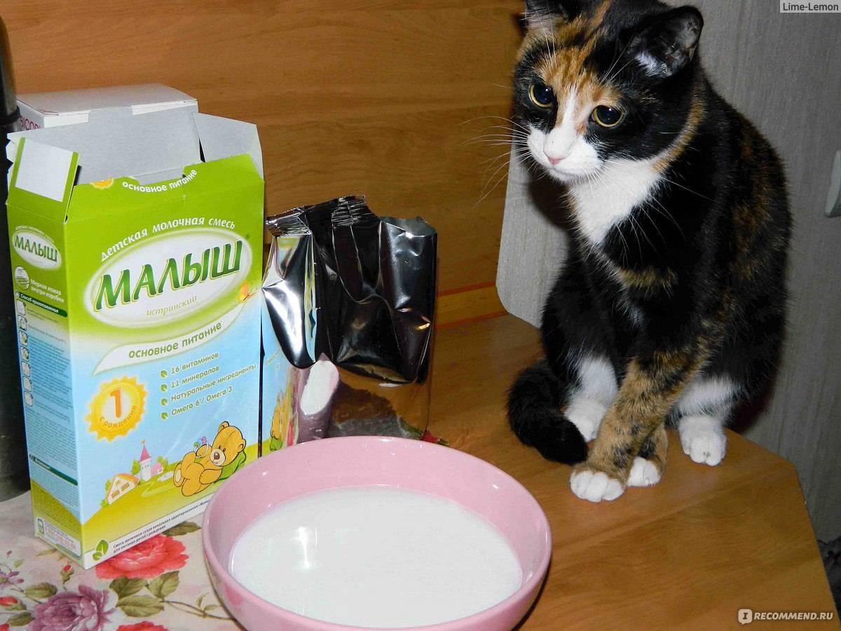 Можно ли давать кефир кошке при почечной недостаточности