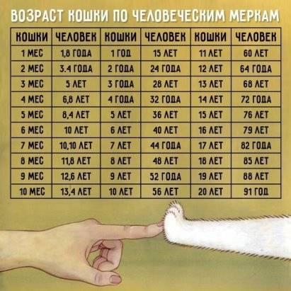 Возраст кошки по человеческим меркам - таблица. сопоставление возраста кошки и человека