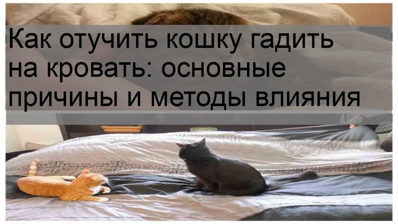 Что делать если кот постоянно писает и срет на диван: порядок отучения