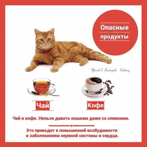 Можно ли коту пить чай