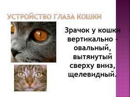 Как видят кошки  как устроено зрение кота с фото и описанием
