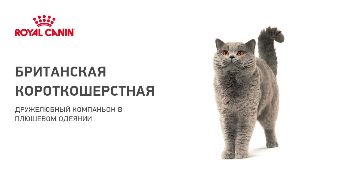 Как правильно и быстро научить котенка пить воду