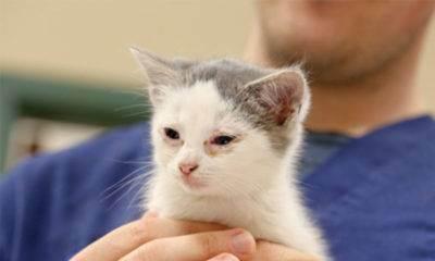 Какие признаки аллергии на кошек