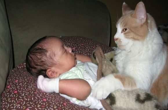 Проходит ли аллергия на кошек у детей с возрастом, без специфического лечения